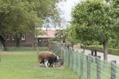 Zorgboerderij Nova_DSC7022a